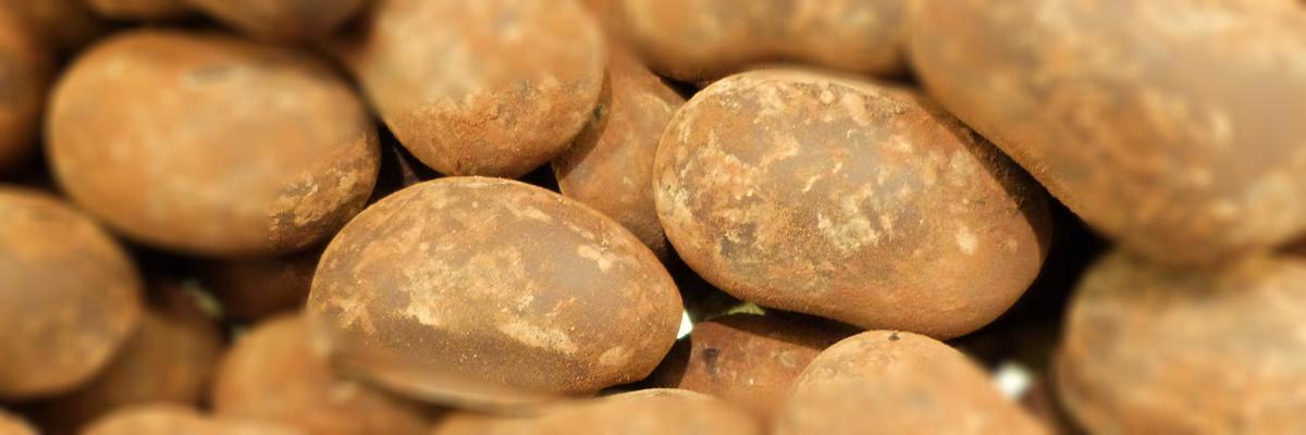 chocolade-truffels-chobon